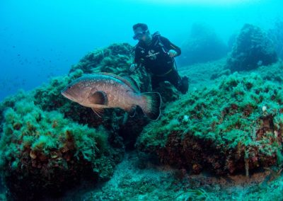 Diver with grouper 11