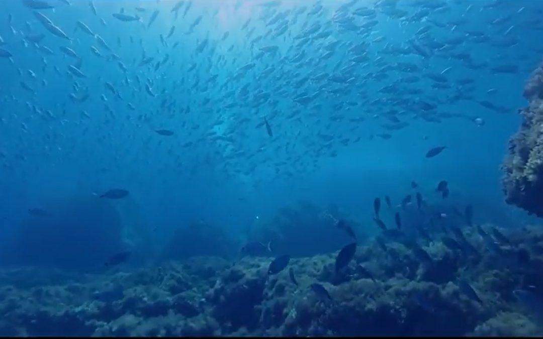 Video del Toro por Miguel Vives