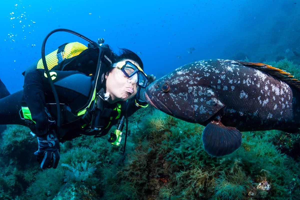 Diver Kissing Grouper