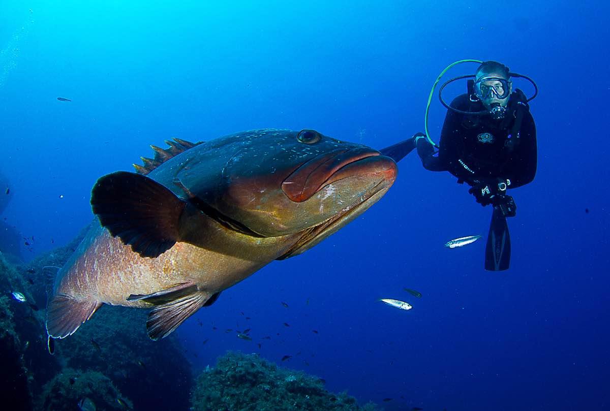Grouper Cabrera 4